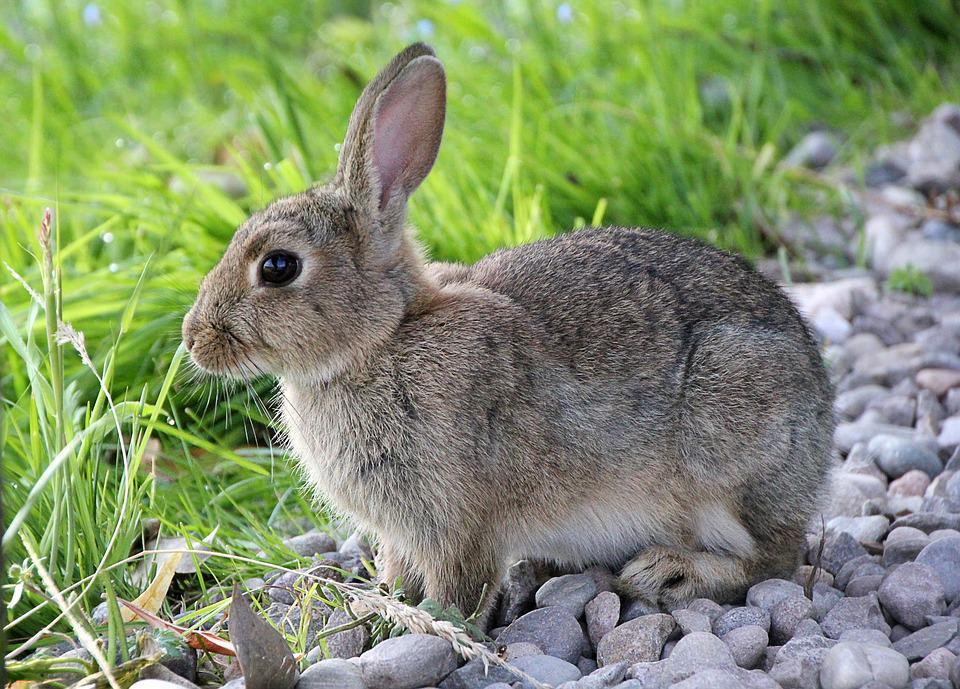 Obrazek posiada pusty atrybut alt; plik o nazwie zajac.jpg